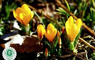 Brīvdienu pasākumi ģimenēm pavasara sajūtu atmodināšanai