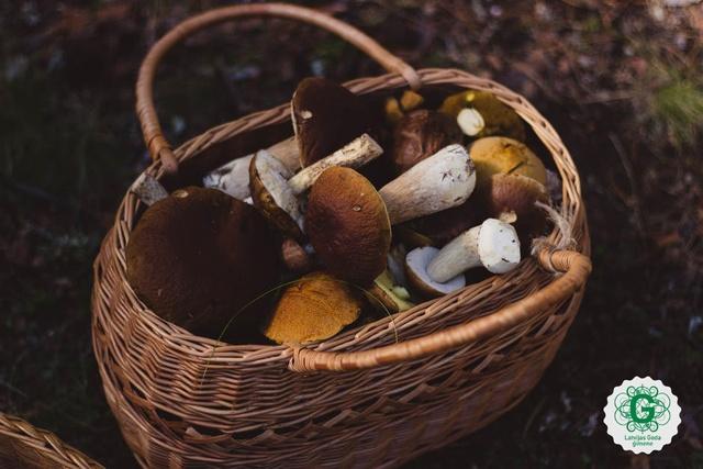 Pilni klēpji meža sēņu – ierosinājumi gatavošanai un padomi patīkamai tīrīšanai
