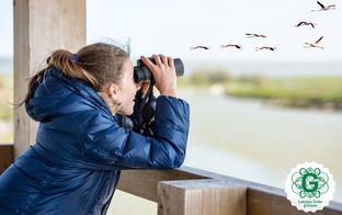 10 padomi, lai izdotos putnu vērošana