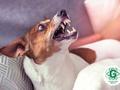 Gādā, lai suns nekļūst par šķērsli palīdzības saņemšanai izsaukumā, ja izsauc Neatliekamo medicīnisko palīdzību