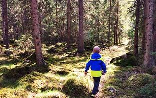 Kas jāņem vērā, ejot uz mežu ar bērnu