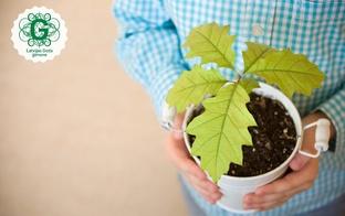 Tēva dienas festivālā 100 ģimenēm dāvinās ozolu stādus  – sava dzimtas koka iestādīšanai