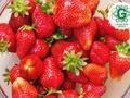 Uztura speciāliste: seši vienkārši veselīga uztura likumi ikdienai