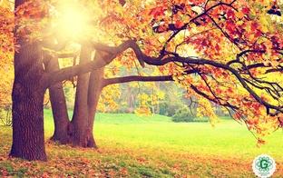 Lieliskas rudenīgas idejas nedēļas nogalei ar ģimeni