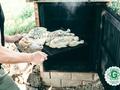 Laiks kūpināt vistu, zivi un cūkgaļu! Pavāra Ērika Dreibanta receptes
