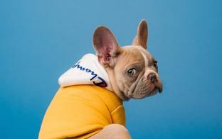 Iemesli par un pret suņa iegādi vai adopciju