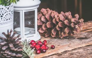 Svinam Ziemas saulgriežus