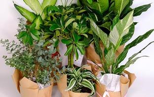 EASYPOT – Baltijā pirmais augu abonēšanas serviss
