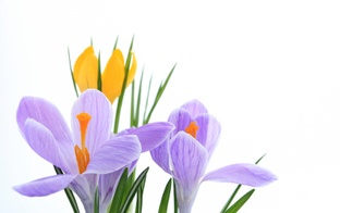 Pavasarīgais paldies par portālu un forumu daudzbērnu ģimenēm!